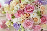 アプリコット色とピンク色のバラ