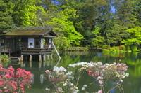 石川県 新緑の兼六園