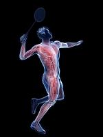 バドミントン選手の筋肉の動き
