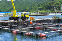 三重県 錦湾の魚の養殖風景