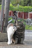 愛知県 一宮市 猫