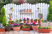 ガーデンシクラメンなどの花