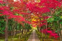 京都府 鹿王院 紅葉