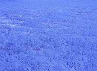北海道 コッタロ湿原