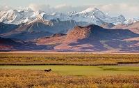 アラスカ アラスカ山脈とヘラジカ