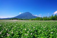 北海道 羊蹄山とジャガイモ畑