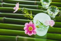 コスモスの花とコップと青竹
