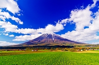 北海道 緑のビート畑と新雪を纏った羊蹄山