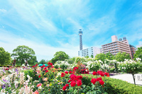 神奈川県 横浜市 山下公園