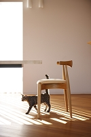 日差し射すテーブルと椅子