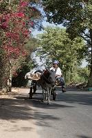 エジプト ロバと荷車(ギザ地区)