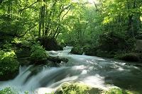 青森県 新緑の奥入瀬渓流 阿修羅の流れ