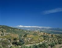 オリーブ畑とシェラネバタ山脈