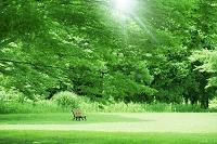 新緑の公園とベンチ