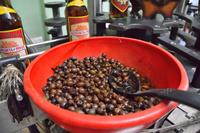 キューバ ラム酒工場 グアバの実
