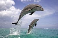 水中から飛んでいるイルカ