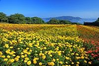 福岡県 福岡市 西区 のこのしまアイランドパークのマリーゴー...
