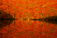 青森県 紅葉の蔦沼