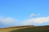 秋晴れの丘と白い雲