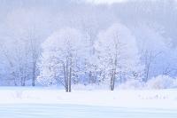 北海道 霧氷