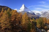 スイス カラマツの紅葉とマッターホルン