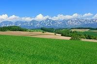 北海道 美瑛の丘