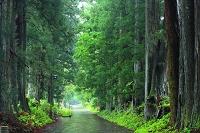 栃木県 日光 杉並木街道 保護地域