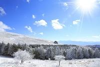 長野県 霧ヶ峰高原 霧氷のモミの木樹林と南アルプス