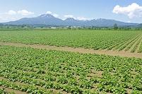 北海道 雪渓のニセコ連山と田園
