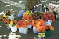 ニュージーランド 路上の花売り
