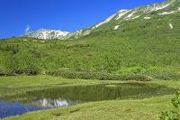長野県 栂池自然園と白馬鑓ヶ岳
