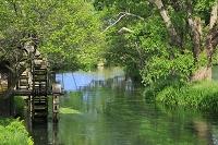 長野県 大王わさび農場 水車小屋と新緑の万水川