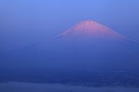 静岡県 朝日に染まる富士山と御殿場市の街並み