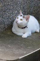 額に模様があるキジ白猫