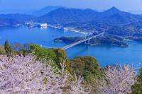 愛媛県 桜咲くカレイ山展望公園より大島大橋と伯方島