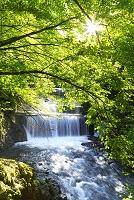 神奈川県  丹沢塩水川の砂防ダム