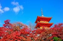 京都府 清水寺 三重の塔と紅葉