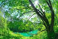 福島県 新緑の赤沼