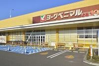 宮城県 ヨークタウン 身障者専用 高齢者専用駐車場