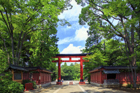 埼玉県 武蔵一宮氷川神社 三の鳥居