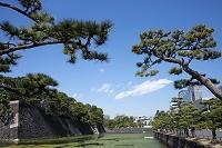 東京都 皇居外苑 松