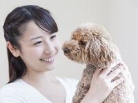 トイプードル 犬を見つめる日本人女性