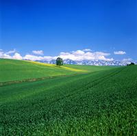 新緑, 丘と大雪山連峰