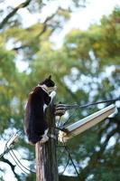 電柱に登る猫