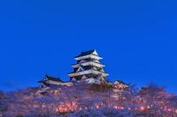 愛媛県 大洲城の夜桜