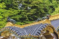 唐門の屋根