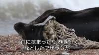 写真素材・ストックフォトのアフロ | 深刻なプラスチックゴミ問題 英のアザラシコロニーに被害