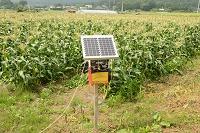 山梨県 トウモロコシ畑 イノシシよけの電気柵