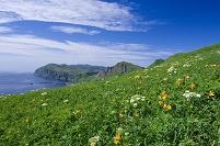 北海道 花咲く礼文島 桃岩展望コース