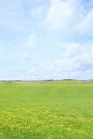 北海道 タンポポ咲く草原と空